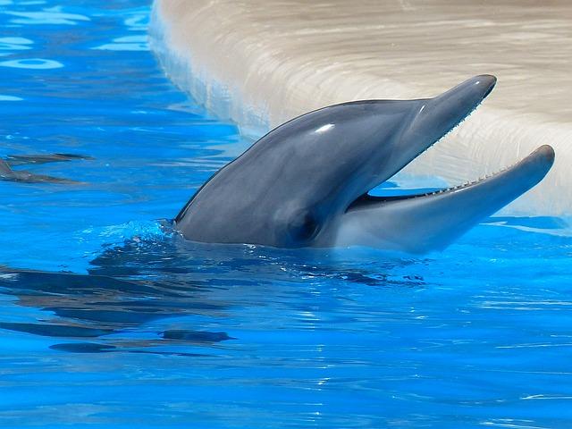 http://pixabay.com/en/bottlenose-dolphin-dolphin-tooth-406763/