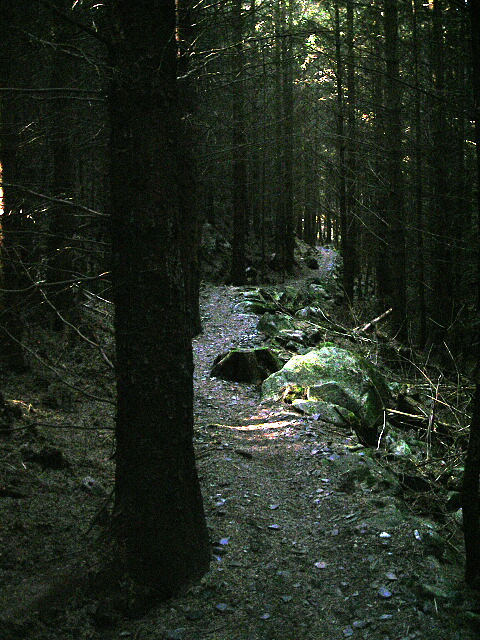 http://upload.wikimedia.org/wikipedia/commons/c/c0/Spooky_Woods_in_Dalbeattie_Forest_-_geograph.org.uk_-_392901.jpg